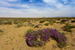 Desert of china with flower Royalty Free Stock Photo