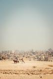 Desert city. In Africa. Egypt royalty free stock photo