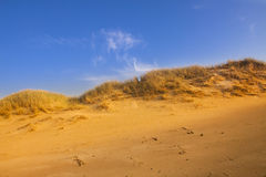 Desert compositions. Desert dunes Royalty Free Stock Images