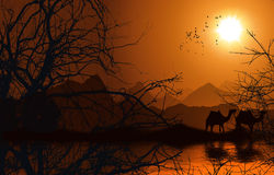 Desert convoy. Convoy of camels walking in the desert beside the nile during sunset with birds flying in the sky Royalty Free Stock Image