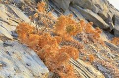 Desert at Crete Stock Photography