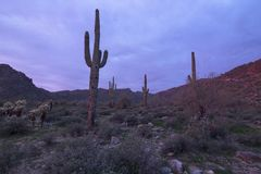 Desert Dawn royalty free stock images