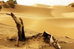 Desert with dead tree Stock Image