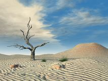Desert Dead Tree Royalty Free Stock Image