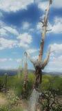 Desert debloom Stock Images