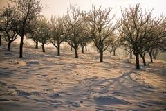 Desert. Deciduous tress in desertic arid area Royalty Free Stock Photography