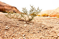 The Desert Degla Valley Sahara royalty free stock photography