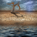 Desert Deluge. Desert with tree and flooding water Stock Photos