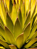 Desert Design Stock Photos