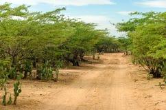 Desert Dirt Road Stock Images