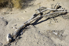 Desert Driftwood Stock Photography