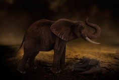Desert drought elephant. Arid dry desert drought with elephant standing over her baby Stock Photo