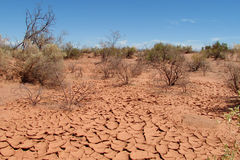 Desert dry soil texture and bushes on it Stock Photography