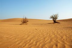 Desert in Dubai. Bushes in a Dubai desert area Stock Images
