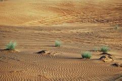 Desert in Dubai. Vegetation in desert, Dubai, UAE Royalty Free Stock Images