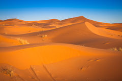 Desert dune at Erg Chebbi near Merzouga in Morocco. Stock Image