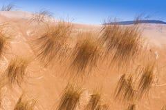 Desert dune grass Stock Images