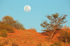 Desert dune with moon Stock Photography