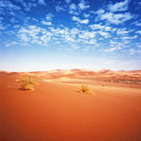Desert dunes Royalty Free Stock Photos