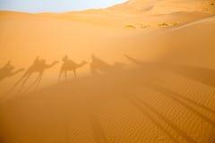 Desert dunes Stock Images