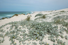 Desert dunes in De hoop nature reserve Stock Images