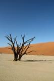 Desert dunes and dead tree. Dead tree in Deadvlei in the Namibian desert in Africa Stock Photo