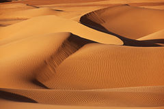 Desert dunes in the Sahara. Desert dunes in evening light in the Sahara Royalty Free Stock Photo