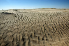 Desert dunes in Sahara Royalty Free Stock Images