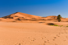 Desert dunes, Sahara, Morocco Stock Photo