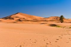 Desert dunes, Sahara, Morocco Stock Photo