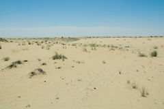 Desert dunes view with growing plants Stock Images