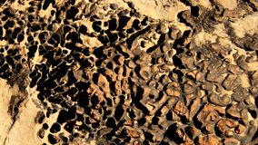 Desert Earth with Stones Royalty Free Stock Image