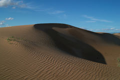 The desert. Edge of the desert area there are green plants, and rolling sand dunes Royalty Free Stock Photos