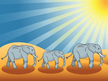 Desert elephants Stock Photography