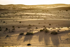 Desert evening mood Oman Royalty Free Stock Image