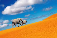 Desert fantasy, elephants walking Stock Photography
