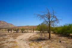 Desert Farm Yard Stock Photography