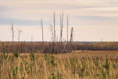 Desert field after forest fire stock photo