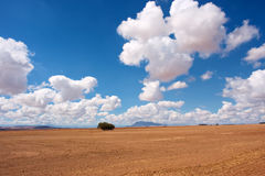 Desert field under majestic skies Royalty Free Stock Photo