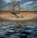 Desert Flood and tree. Desert Flood and craggy tree Royalty Free Stock Images