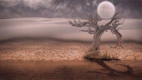 Desert Flood Stock Image