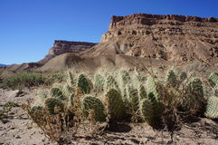 Desert Floor Cacti Royalty Free Stock Photos