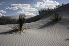 Desert Flora. White Sands New Mexico USA Stock Photo