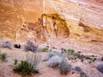 Desert Flora Stock Images