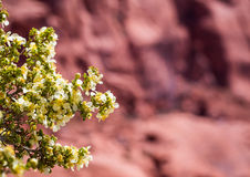 Desert flower in foreground with Rock formations in Southwest United States stock photo