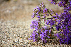 Desert flowers Royalty Free Stock Image