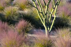 Desert foliage Royalty Free Stock Photo