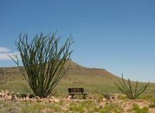 Desert foliage at a southwestern campground Stock Photos