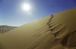 Desert footprints Royalty Free Stock Photo