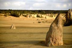 Desert forest Stock Image